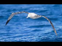 List of Oceans Animals