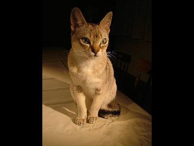 cats on death row