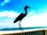 Crane image