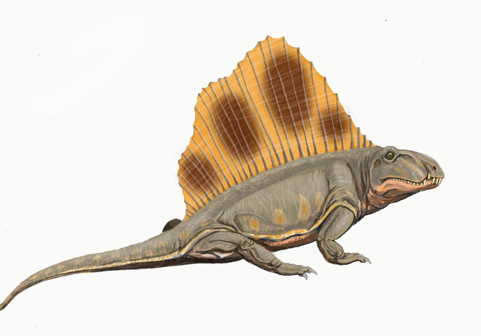 Dimetrodon Info Photo 2