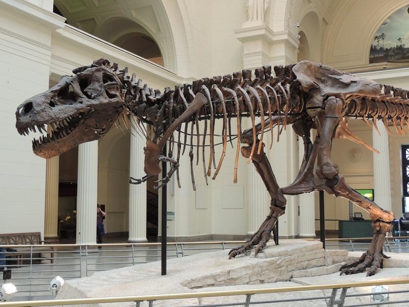 Dinosaur Tyrannosaurus Rex Info Photo 2