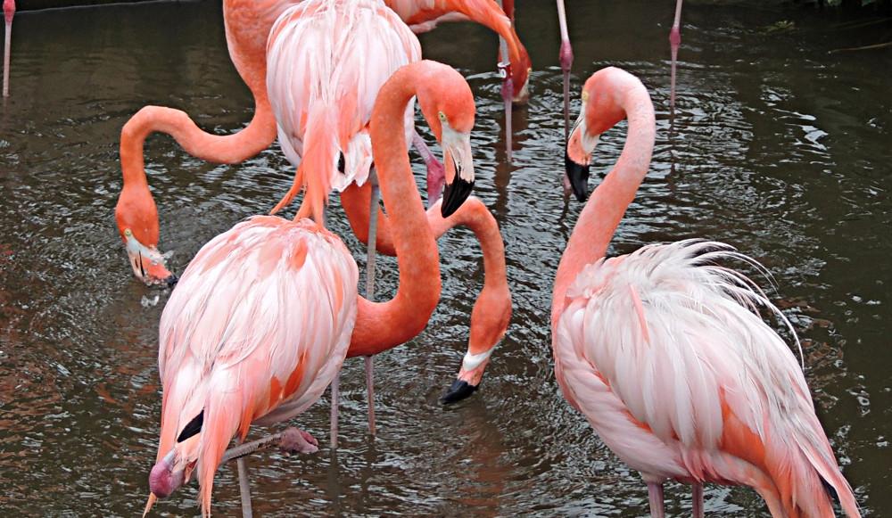 Flamingo Info Photo 6