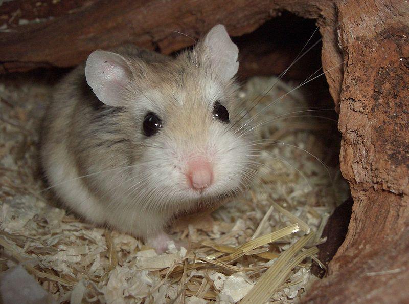 www hamster com