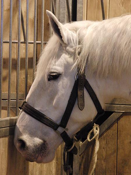 Horse Boulonnais Information
