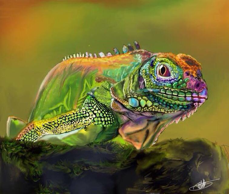 Tropical Rainforest Biome Animals List