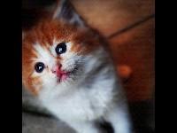 Kitten Information For Kids