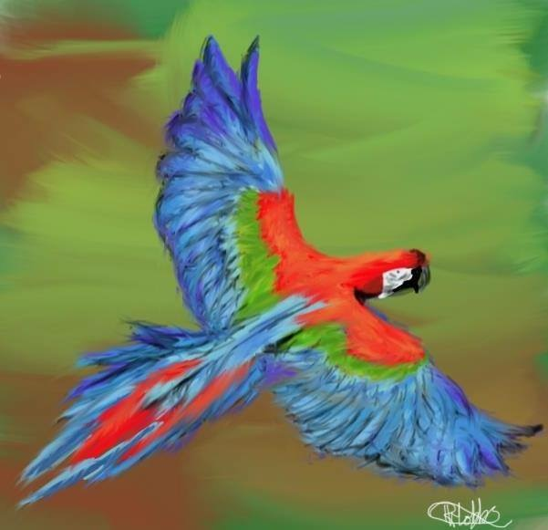 Macaw Red And Green Macaw Information For Kids