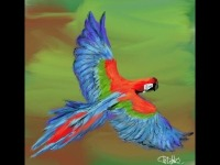 Red-and-green Macaw image