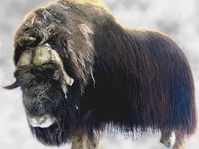 List Of Polar Regions Animals