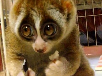 Animal Jigsaw Puzzle 1
