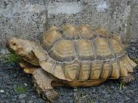 Tortoise image