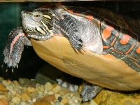 turtleimage1