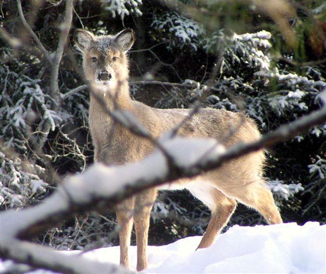 Sudoku Medium Woleer (Wolf + Deer) I...