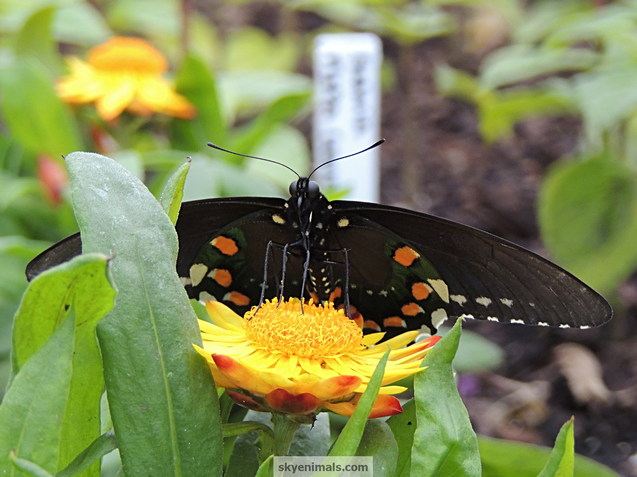 free butterfly wallpaper images