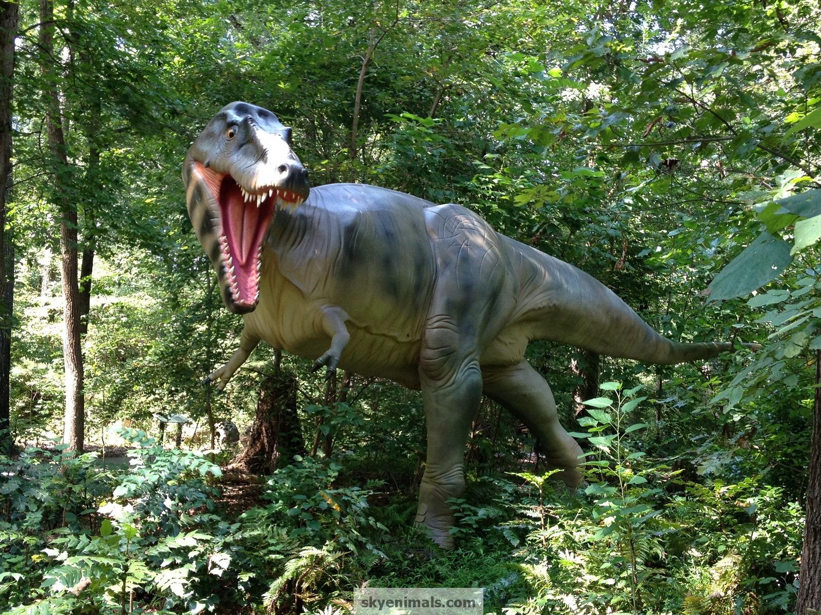 Wallpaper Albertosaurus Images
