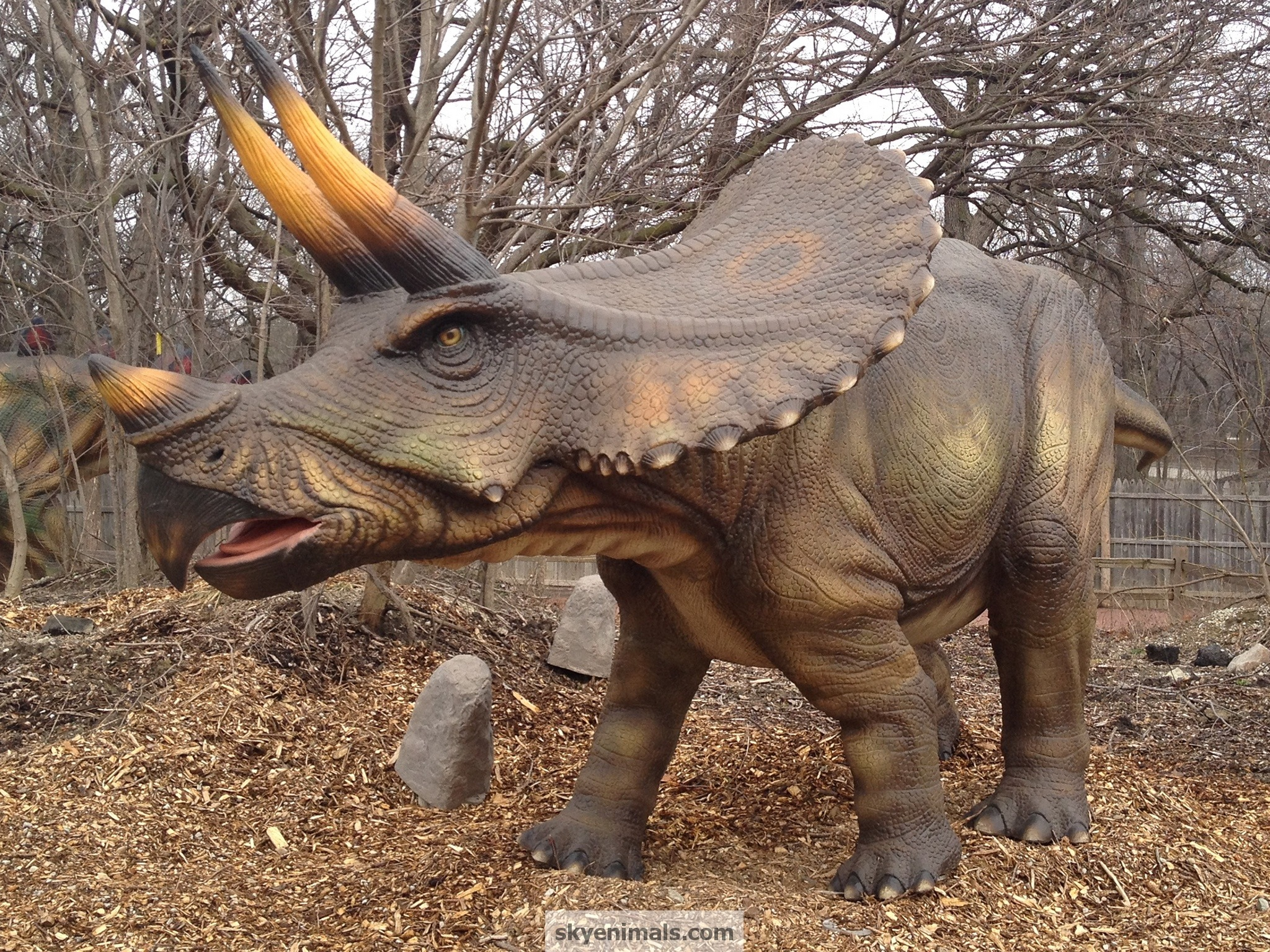 Triceratops Dinosaur Wallpaper Image